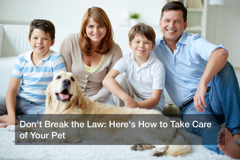Don't Break the Law: Here's How to Take Care of Your Pet